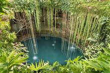 Rainforest Cenote Found In Yuc...