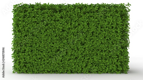 Cuadros en Lienzo 3d rendering of a green plant isolated on a white background