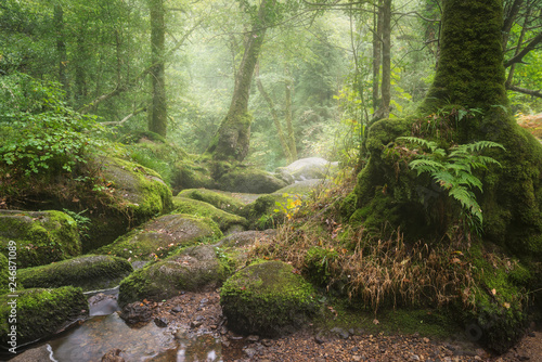 Aluminium Prints Forest river Stunning landscape image of Golitha Falls in Devon on misty Summer morning with stream flowing through woodland