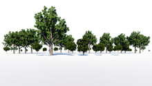 3d Rendering Of A Group Of Tre...