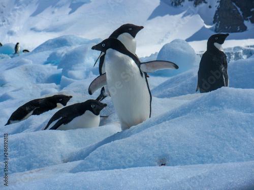 Tuinposter Pinguin Look how shiny I am.