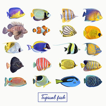 Bright Colorful Tropical Fish