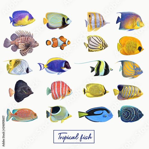 Bright colorful tropical fish Wall mural