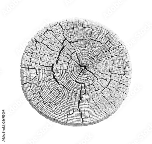 Fotografía Black and white wood texture of growth ring pattern from a slice of tree