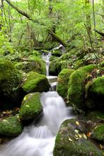 숲속의 계곡과 강 이끼...