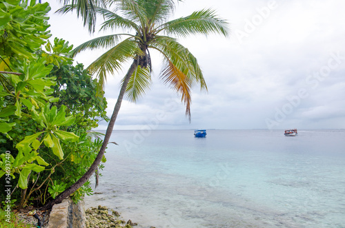 island of Maldives of Fihalhohi beautiful landscape of a palm tree and ocean Canvas Print