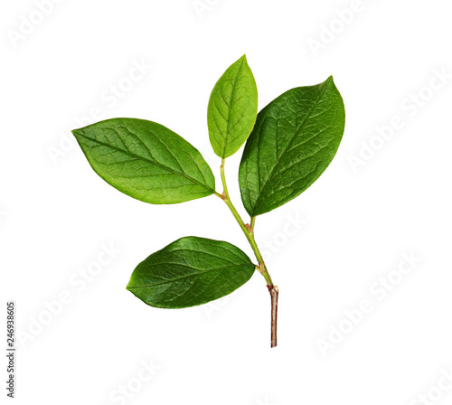 Fresh branch with green leaves Wall mural