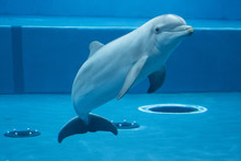 The Dolphin In The Aquarium