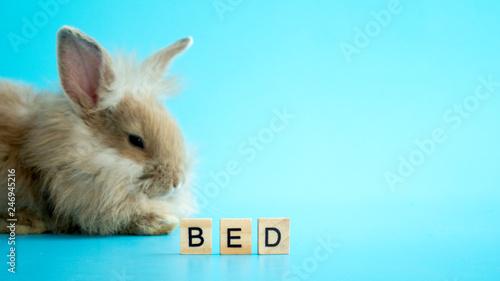 Fotodibond 3D Teksta łóżko na drewnianym talerzu z zamazanym śpiącym królikiem w błękitnym tle