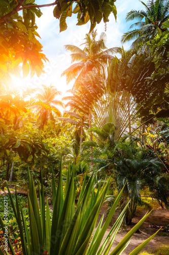 Deurstickers Asia land Busuanga Paradise Garden