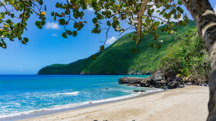 Ein Strand mit Bergen und Baum in der Karibik