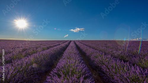 Lavender 29 - 246974669