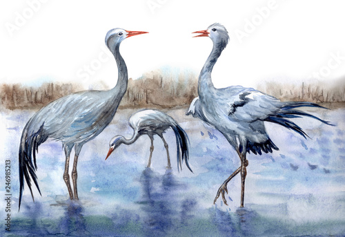 Cranes Stanley by the river, watercolor painting Wallpaper Mural