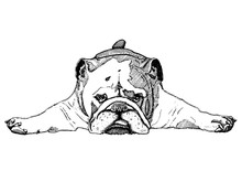 Vector Illustration Of A Bulldog In Black And White