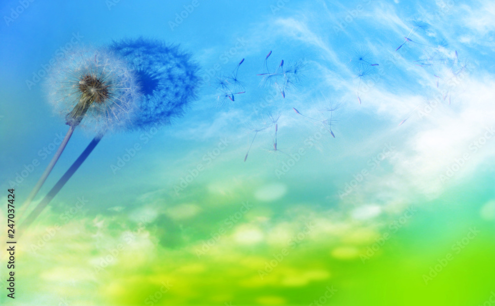 Fototapety, obrazy: abstract composition with spring dandelion against the sky