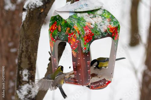 Valokuvatapetti Titmouse and feeder in the winter park. Bird