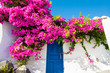 Pink flowers on the facade of the house. Traditional greek architecture on Santorini island, Greece.