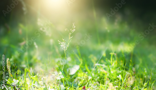 Foto auf Leinwand Lime grun Green grass in the summer forest. Shallow depth of field, green nature background