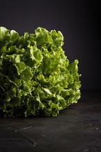 Curly Salad Lettuce On The Bla...
