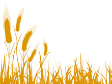 Agriculture Wheat Illustration...