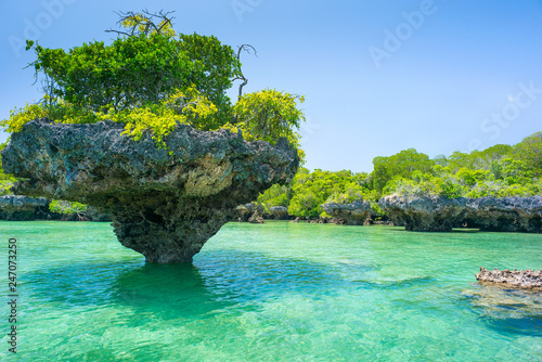 Tuinposter Zanzibar stone rock with trees in lagoon in Zanzibar