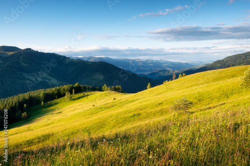 Field in the mountains. Summer forest in mountains. Natural summer landscape. Meadow with flowers in mountains. Rural landscape. Mountains landscape-image