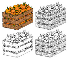 Vector Illustration Set Of Sketch Hand Drawn Wooden Box Full Of Oranges With Green Leaves. Fresh Fruits, Spring Or Summer Background, Garden, Italy, Spain, Mandarins. Organic Food Label.
