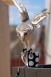 Barn owl sitting on a coffee cup