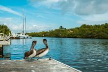 Marina Pelicans