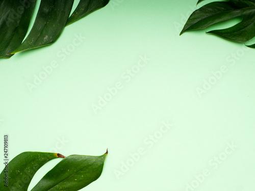 tropikalna-palma-pozostawia-wiosne