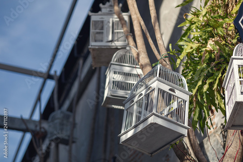 Fotografie, Obraz  Many different sizes, colorful, wooden cages for birds