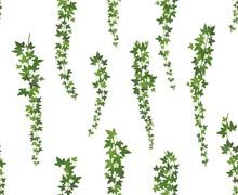 Creeper Green Ivy. Wall Climbi...