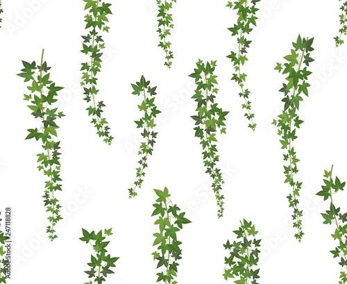 Leinwand Poster Creeper green ivy