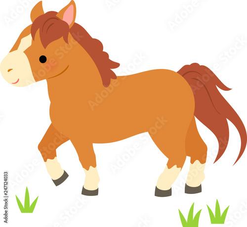 Fototapeta 草むらを歩く茶色い馬 obraz