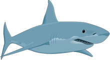 Great White Shark Vector Illus...
