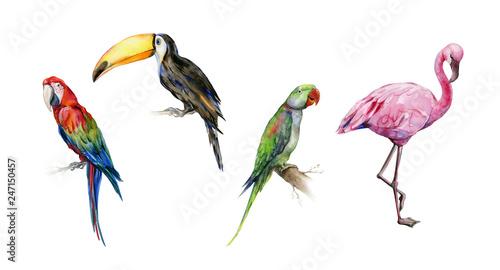 Watercolor illustration set of tropical  birds Canvas Print