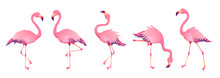 Pink Flamingos. Cute Flamingo ...
