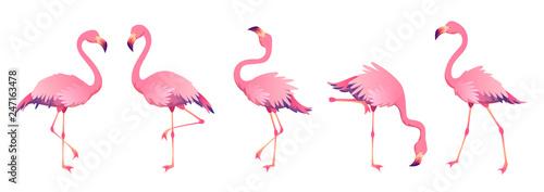 Papel de parede Pink flamingos