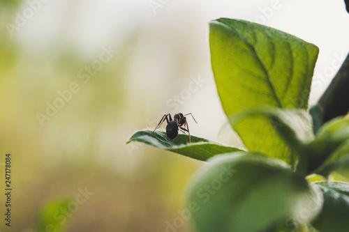 Plakat mrówka na liściu