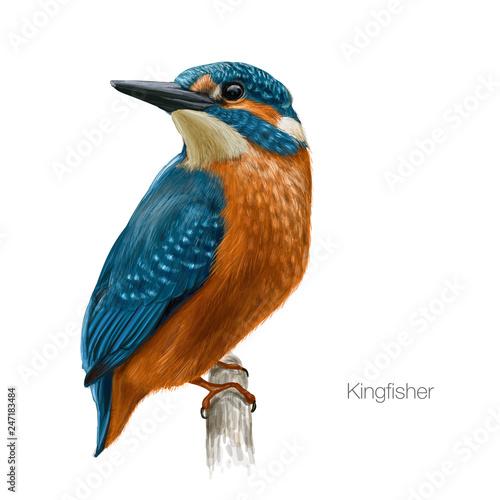 Canvastavla kingfisher hand drawn vector illustration