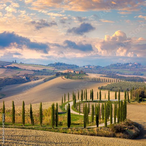 Obraz Landscape of hills, country road, cypresses trees - Italy - fototapety do salonu