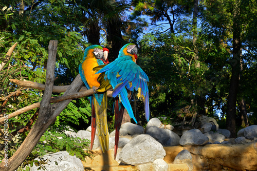 Aras bleus sur une branche en plein soleil sur fond de forêt