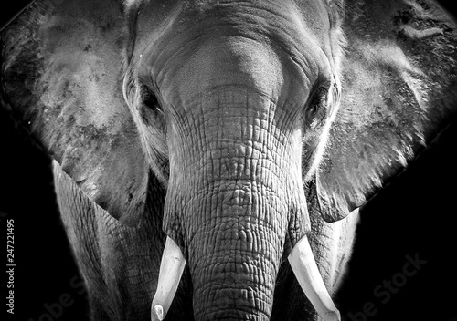Elefant Canvas Print