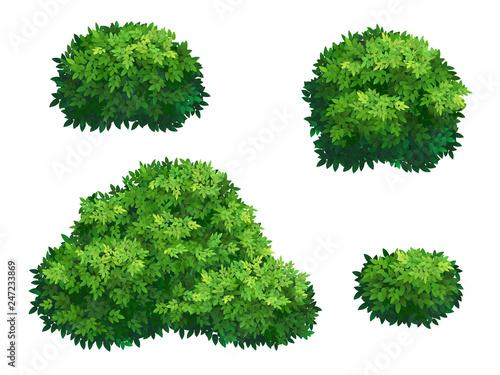 Fotografia Green bushes and tree crown.