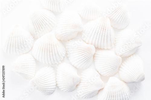 Fotografie, Obraz  Sea Shells background