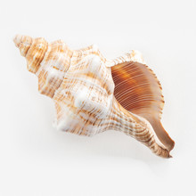 DSea Shells On A White Background