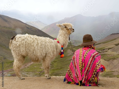 Lama in Peruvian Andes Canvas Print