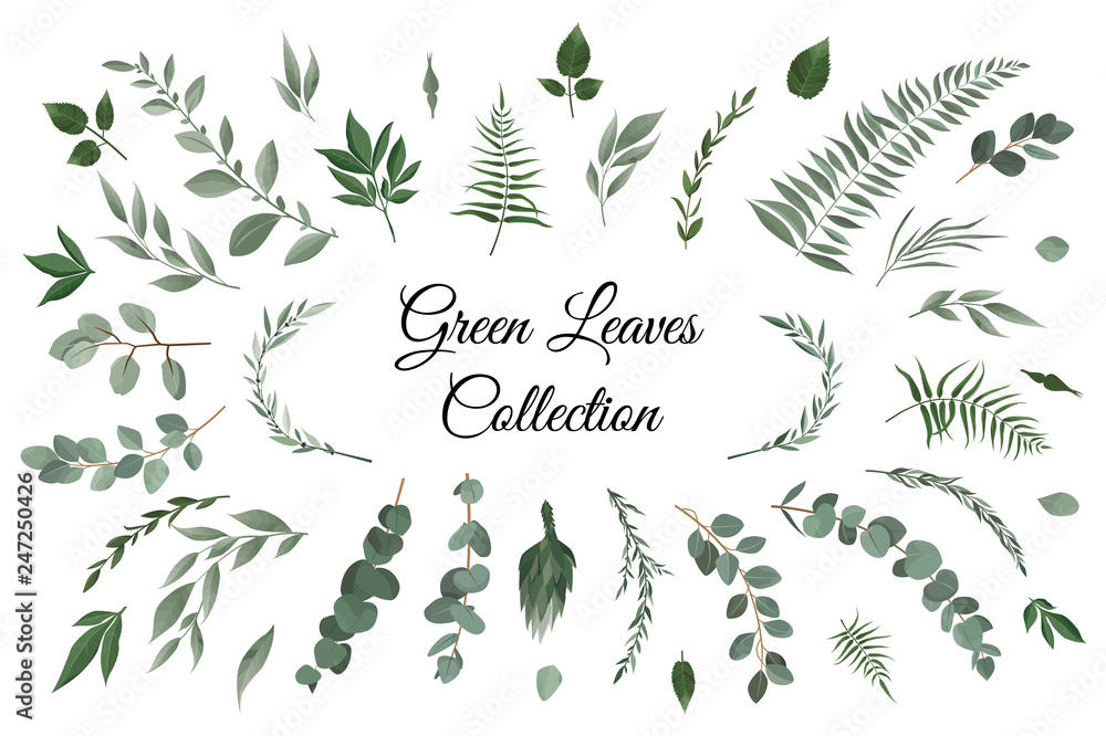 Fototapety, obrazy: Vector designer elements set collection of greeng leaves herbs in watercolor style.