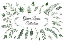 Vector Designer Elements Set Collection Of Greeng Leaves Herbs In Watercolor Style.