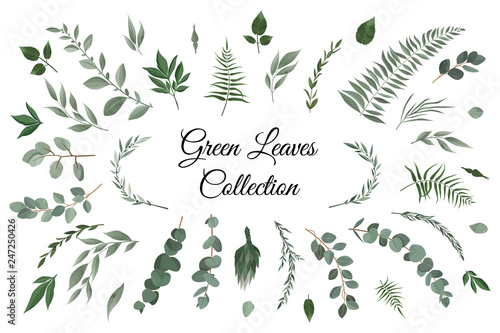 Foto  Vector designer elements set collection of greeng leaves herbs in watercolor style